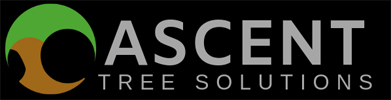 Ascent Tree solutions